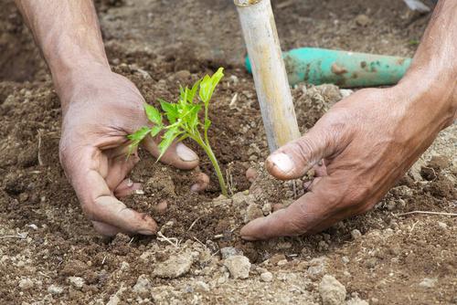 Die 3 Grundprinzipien der Permakultur