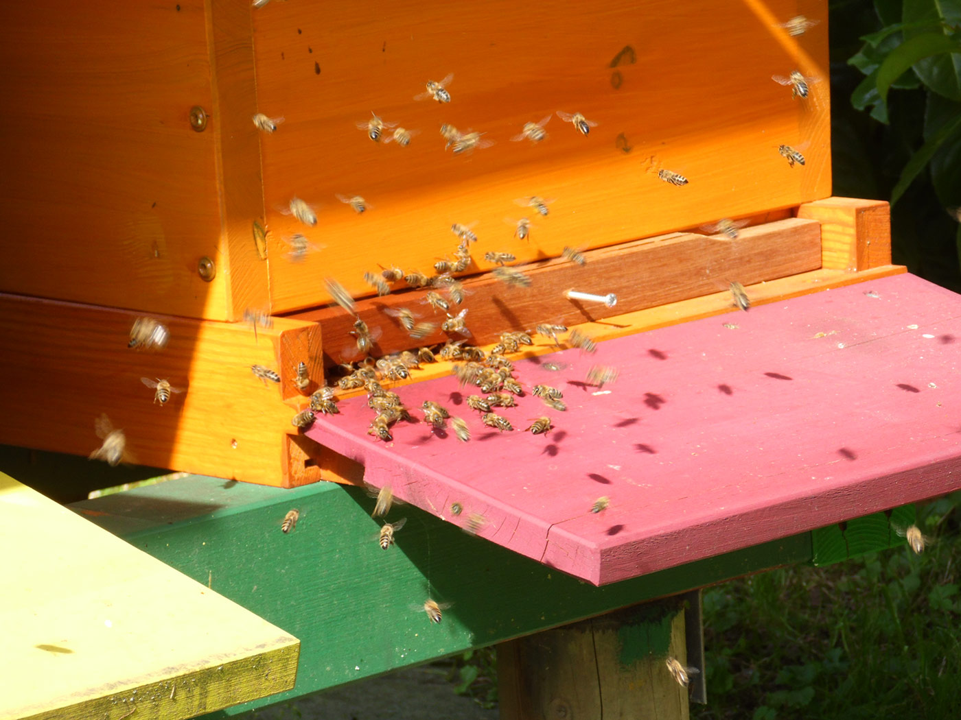 Hier entsteht unser Bienenhonig