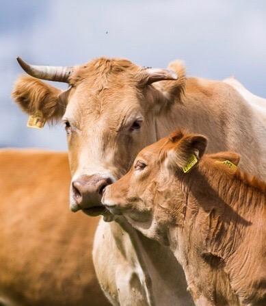 Ein landwirtschaftlicher Betrieb wird zu einem Ökosystem