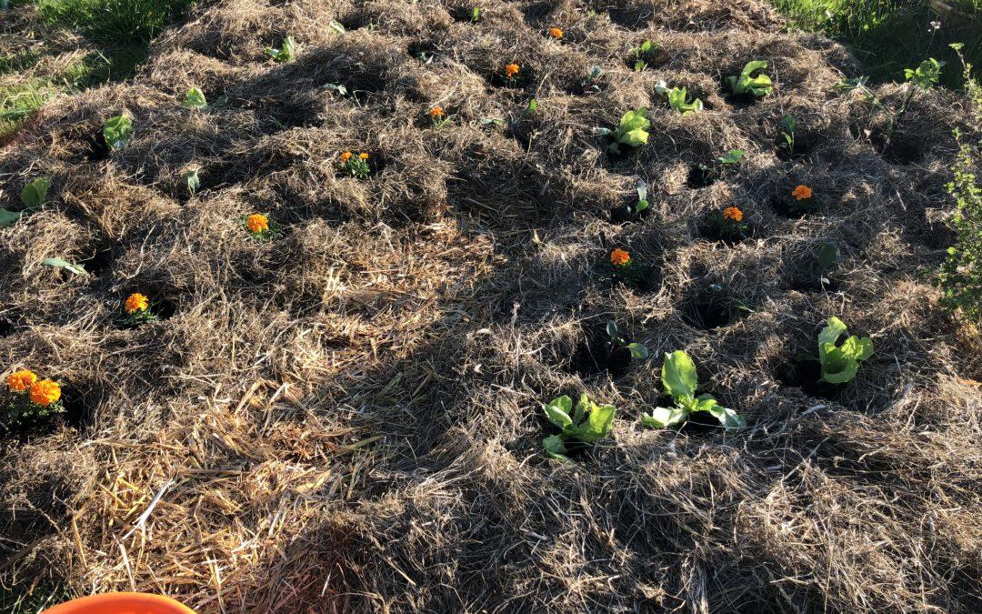 Gärtnern ohne Umgraben