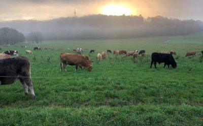 Wertschätzung in der Landwirtschaft