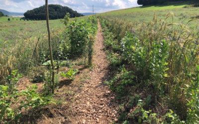 Einführung in den dynamischen Agroforst am 13. August 2021
