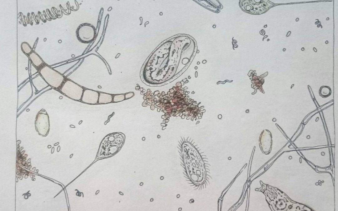 Einführung in die Welt der Bodenorganismen – Seminar